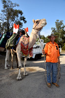 K285 - Lakes Entrance Camel Rides, March 6, 2016