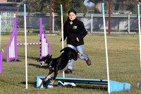 K1130 - Bairnsdale Dog Agility Trials, August 7, 2016