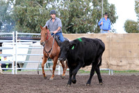 K531 - Bairnsdale Team Penning at Salt Creek, April 23, 2016