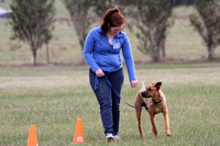 K932 - Bairnsdale Dog Obedience, July 2, 2016